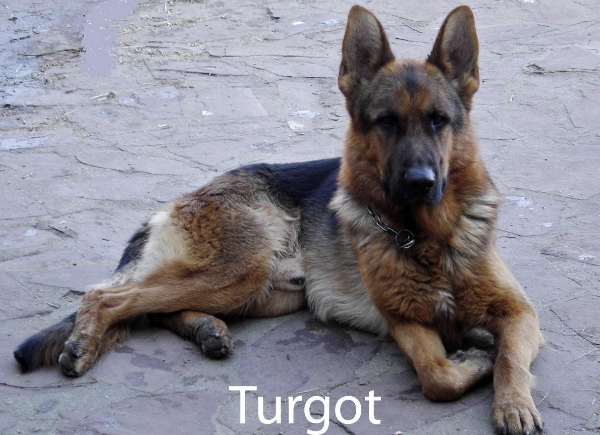 turgotmodifi.jpg