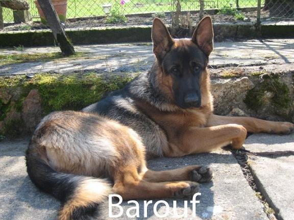 barouf5.jpg